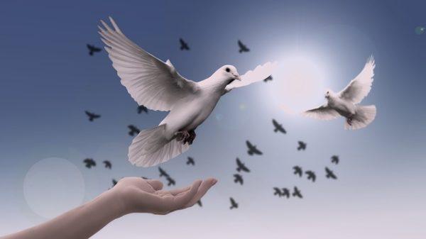 голуби на свободе