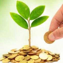 монеты и растение и рука