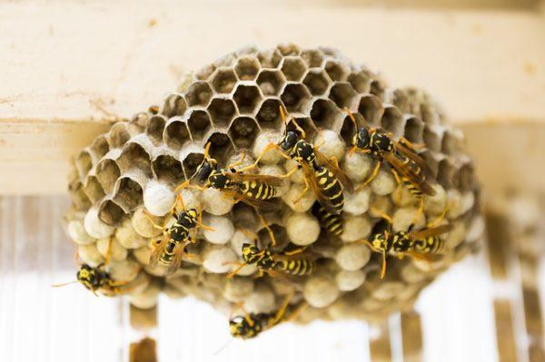 соты пчелы мёд